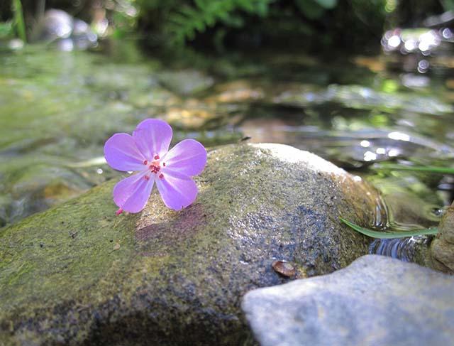 003_flowersphoto